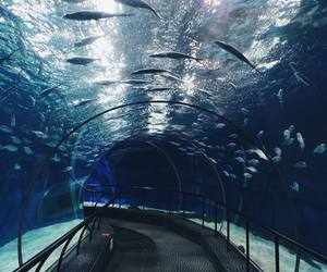 aquarium, life, and amazing image