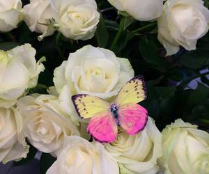 butterfly, flowers, and roses image