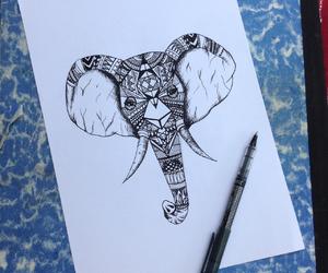 africa, animal, and animals image