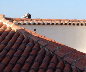 pigeon, rooftop, and together image