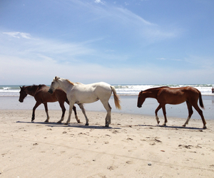 beach, beautiful, and horse image