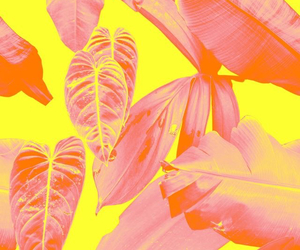 wallpaper, leaves, and pink image