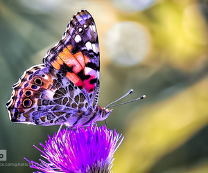 beauty, colors, and butterfly image