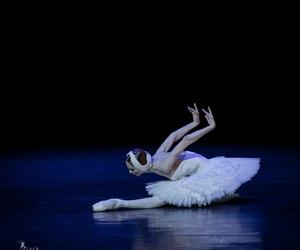 swan lake image