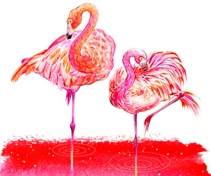 flamingo, lovers, and love image