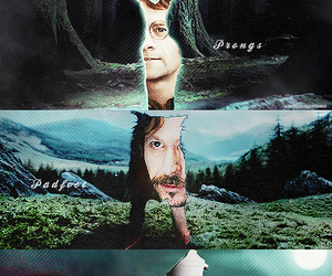 harry potter, padfoot, and moony image