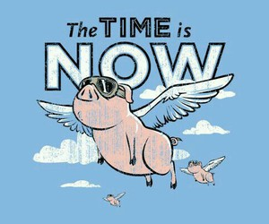 pig and time image
