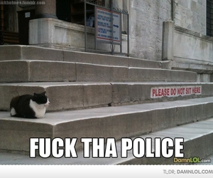 funny and kitty image