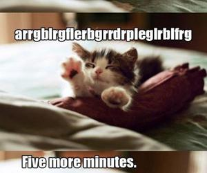 cat, funny, and wake up image