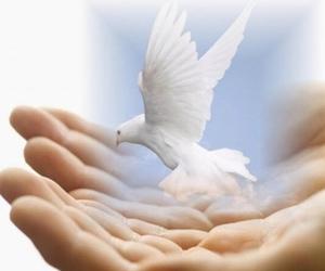 dove and white image