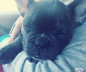 adorable, bulldog, and cachorro image
