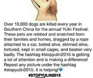 stopyulin2015 and dog image