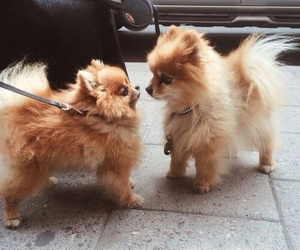 fluffy, cute, and puppies image
