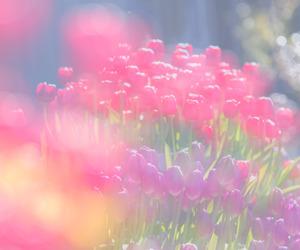 beautiful, green, and tulip image