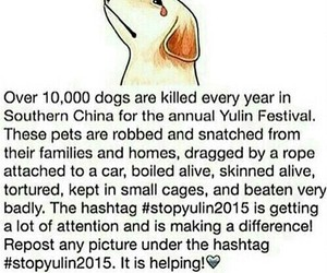 stopyulin2015, dog, and stop image