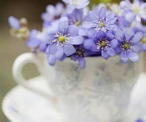 flowers, cup, and photography image