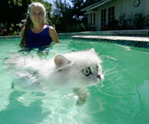 cat, pool, and swimming image