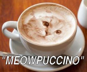 cat, cats, and coffee image