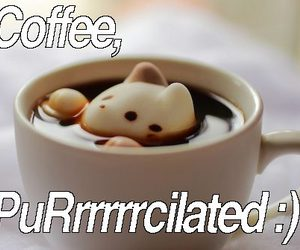 cat, coffee, and funny cat image