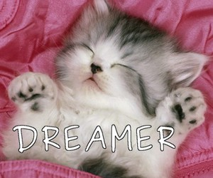 meow, cat, and dreamer image
