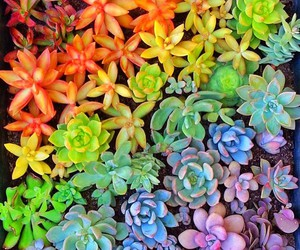 plants, beautiful, and colorful image
