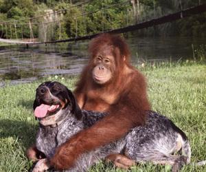 buddies, dog, and bff's image