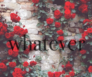 rose, whatever, and red image