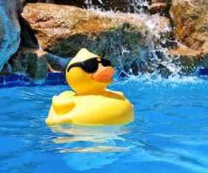 summer, duck, and pool image