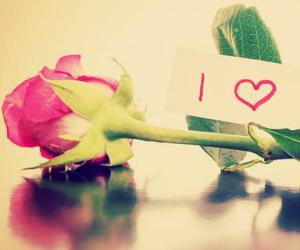 <3, love, and flowers image