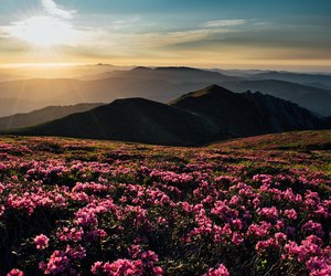 flowers and mountains image