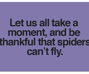 spider, text, and funny image