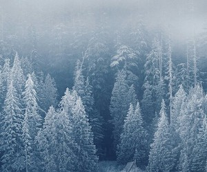 forest, landscape, and snowy image