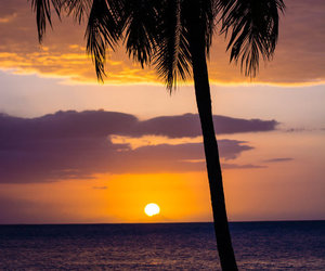summer, palms, and sunset image