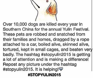 stopyulin2015, dog, and stop image