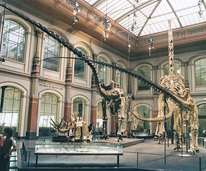 museum, dinosaur, and skeleton image