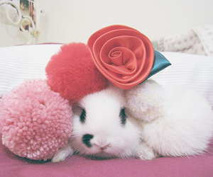 bunny and pink image
