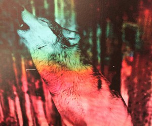 wolf, wallpaper, and indie image