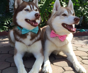 blue, bows, and dapper image
