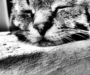 black and white, cat, and pussy image