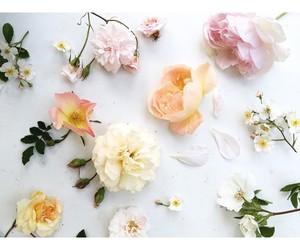 flowers, happiness, and orange image
