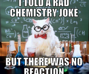 cat, chemistry, and science image