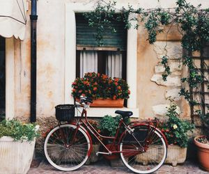 bike, flowers, and italy image