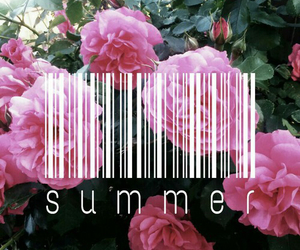 summer, flowers, and pink image