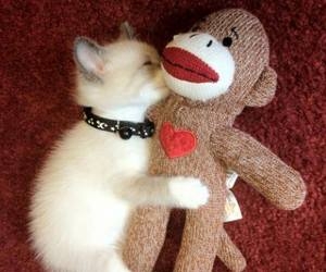 cat, cute, and cuddle image