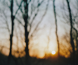beautiful, trees, and flickr image