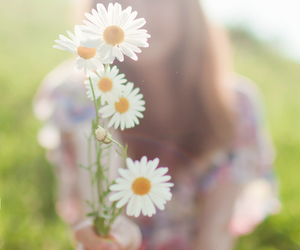 flowers, pretty, and daisy image