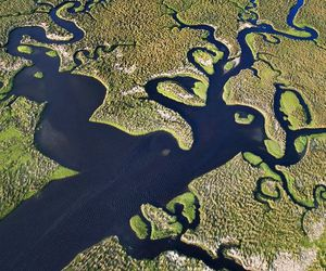 florida, nature, and the everglades image