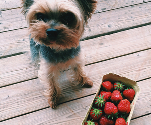 dog, strawberry, and animal image