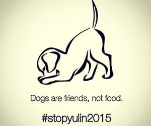 dog, stopyulin2015, and friends image