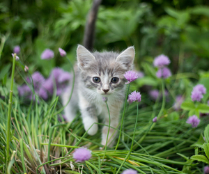 cats, kitten, and nature image
